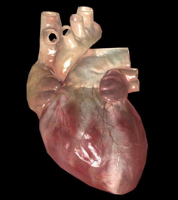 医学三维模型在线预览